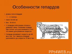 Особенности гепардов Длина тела гепардов 1 – 1.5 метра. Хвост 60-80 см Вес- 35-6