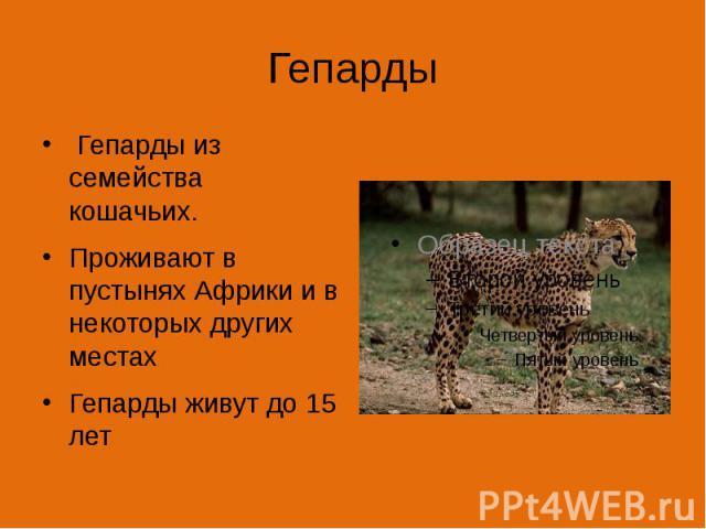 Гепарды Гепарды из семейства кошачьих. Проживают в пустынях Африки и в некоторых других местах Гепарды живут до 15 лет