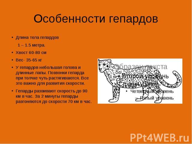 Особенности гепардов Длина тела гепардов 1 – 1.5 метра. Хвост 60-80 см Вес- 35-65 кг У гепардов небольшая голова и длинные лапы. Позвонки гепарда при толчке чуть растягиваются. Все это важно для развития скорости. Гепарды развивают скорость до 90 км…