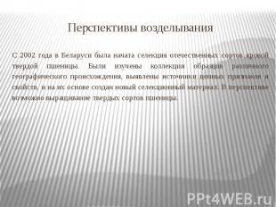 Перспективы возделывания С 2002 года в Беларуси была начата селекция отечественн