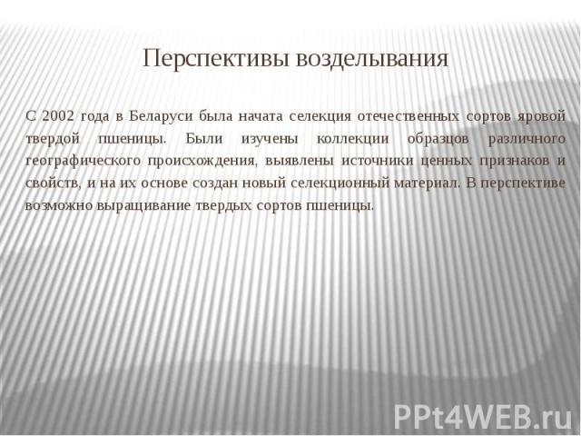Перспективы возделывания С 2002 года в Беларуси была начата селекция отечественных сортов яровой твердой пшеницы. Были изучены коллекции образцов различного географического происхождения, выявлены источники ценных признаков и свойств, и на их основе…