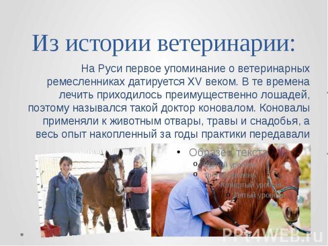 Из истории ветеринарии: На Руси первое упоминание о ветеринарных ремесленниках датируется XV веком. В те времена лечить приходилось преимущественно лошадей, поэтому назывался такой доктор коновалом. Коновалы применяли к животным отвары, травы и снад…