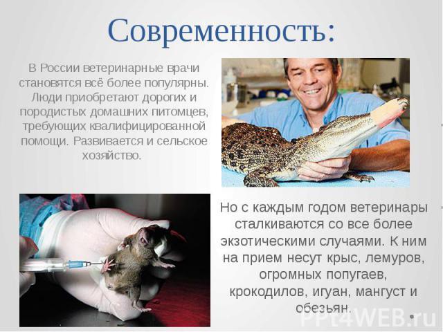 Современность: Но с каждым годом ветеринары сталкиваются со все более экзотическими случаями. К ним на прием несут крыс, лемуров, огромных попугаев, крокодилов, игуан, мангуст и обезьян.