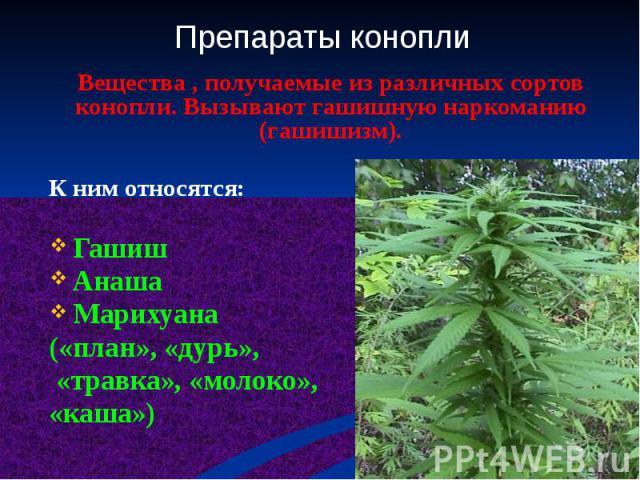 Вещества , получаемые из различных сортов конопли. Вызывают гашишную наркоманию (гашишизм). К ним относятся: Гашиш Анаша Марихуана («план», «дурь», «травка», «молоко», «каша»)