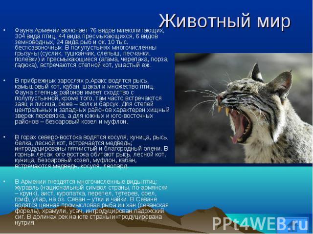 Фауна Армении включает 76 видов млекопитающих, 304 вида птиц, 44 вида пресмыкающихся, 6 видов земноводных, 24 вида рыб и ок. 10 тыс. беспозвоночных. В полупустынях многочисленны грызуны (суслик, тушканчик, слепыш, песчанки, полевки) и пресмыкающиеся…