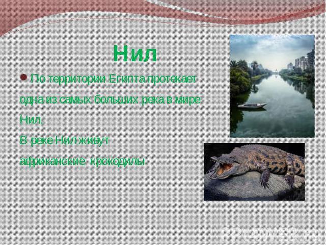 Нил По территории Египта протекает одна из самых больших река в мире Нил. В реке Нил живут африканские крокодилы
