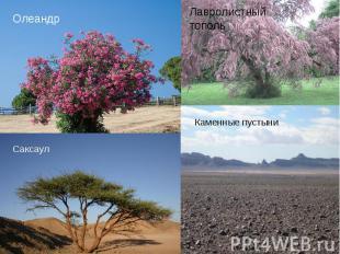 Флора На равнинах Афганистана преобладают пустыни. Плоскогорья заняты степями. Л