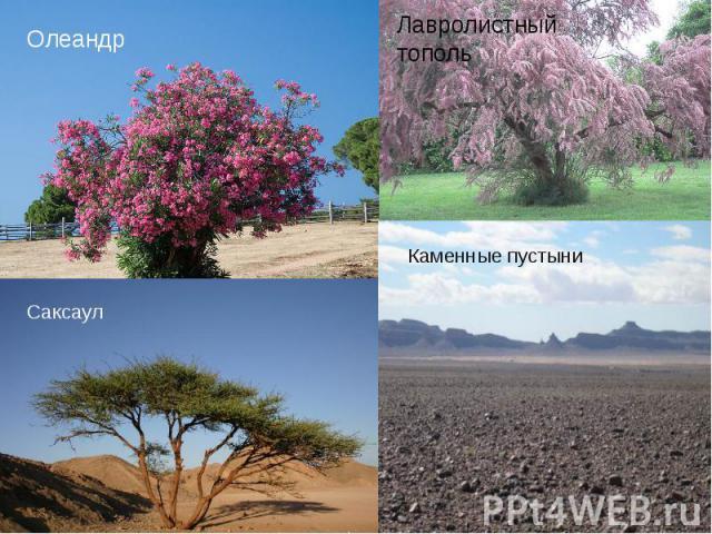 Флора На равнинах Афганистана преобладают пустыни. Плоскогорья заняты степями. Леса сосредоточены в среднегорном поясе Гиндукуша. В Афганистане преобладают сухостепные и пустынные ландшафты, сухие степи распространены на предгорных равнинах и в межг…