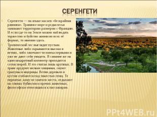 Серенгети — на языке масаев «бескрайняя равнина». Травяное море и редколесья зан