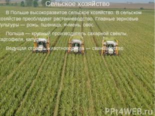 Сельское хозяйство В Польше высокоразвитое сельское хозяйство. В сельском хозяйс