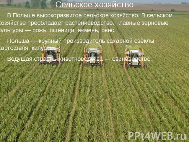 Сельское хозяйство В Польше высокоразвитое сельское хозяйство. В сельском хозяйстве преобладаетрастениеводство. Главные зерновые культуры— рожь, пшеница, ячмень, овёс. Польша— крупный производительсахарной свёклы, картофеля, …