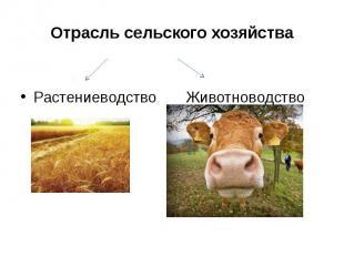 Отрасль сельского хозяйства Растениеводство Животноводство