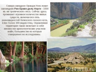 Северо-западнее Орандж-Уолк лежит заповедник Рио-Браво-дель-Норте - 1000 кв. км