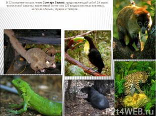 В 32 км южнее города лежит Зоопарк Белиза, представляющий собой 29 акров тропиче