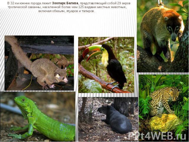 В 32 км южнее города лежит Зоопарк Белиза, представляющий собой 29 акров тропической саванны, населенной более чем 125 видами местных животных, включая обезьян, ягуаров и тапиров. В 32 км южнее города лежит Зоопарк Белиза, представляющий собой 29 ак…