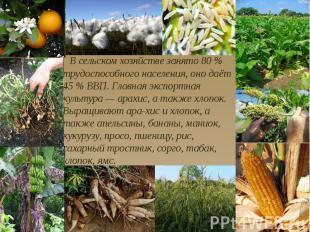 В сельском хозяйстве занято 80 % трудоспособного населения, оно даёт 45 % ВВП. Г