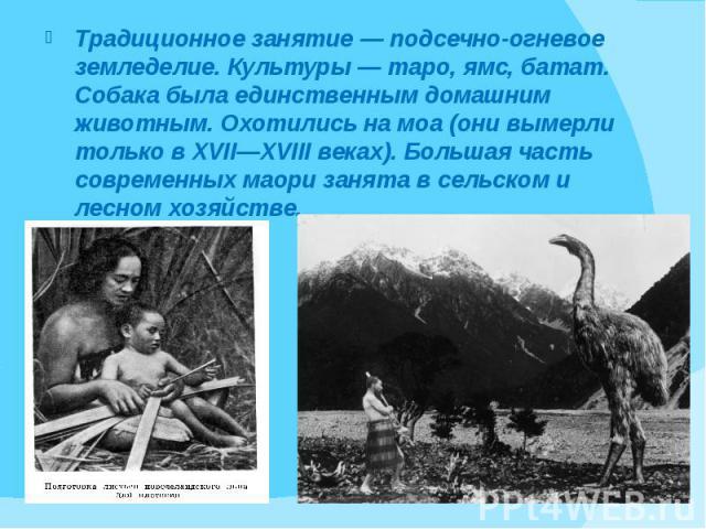 Традиционное занятие — подсечно-огневое земледелие. Культуры — таро, ямс, батат. Собака была единственным домашним животным. Охотились на моа (они вымерли только в XVII—XVIII веках). Большая часть современных маори занята в сельском и лесном хозяйст…