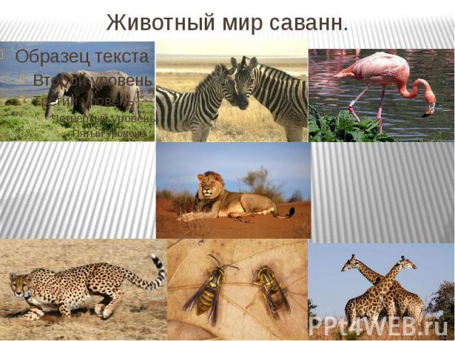 Животный мир саванн.