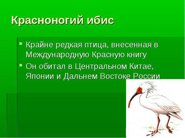 Крайне редкая птица, внесенная в Международную Красную книгу Крайне редкая птица, внесенная в Международную Красную книгу Он обитал в Центральном Китае, Японии и Дальнем Востоке России