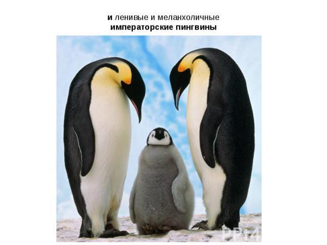 и ленивые и меланхоличные императорские пингвины