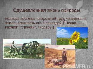 Одушевленная жизнь природы Кольцов воспевал радостный труд человека на земле, сл