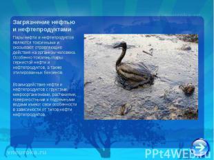 Пары нефти и нефтепродуктов являются токсичными и оказывают отравляющие действия