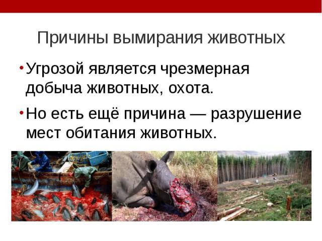 Причины вымирания животных Угрозой является чрезмерная добыча животных, охота. Но есть ещё причина — разрушение мест обитания животных.