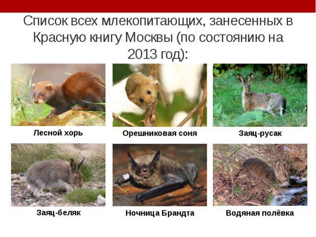 Список всех млекопитающих, занесенных в Красную книгу Москвы (по состоянию на 2013 год):