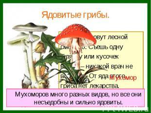 Этот гриб зовут лесной Этот гриб зовут лесной смертью. Съешь одну шляпку или кус