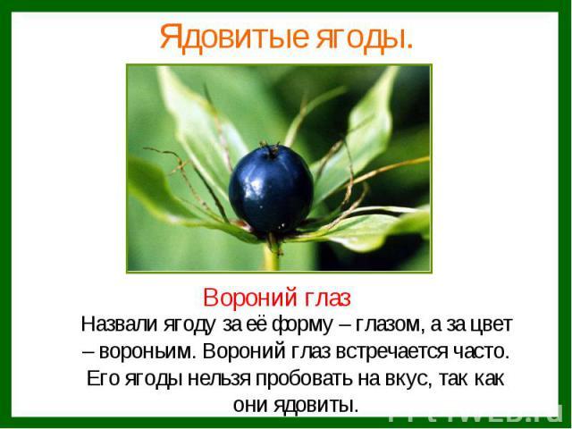 Назвали ягоду за её форму – глазом, а за цвет Назвали ягоду за её форму – глазом, а за цвет – вороньим. Вороний глаз встречается часто. Его ягоды нельзя пробовать на вкус, так как они ядовиты.