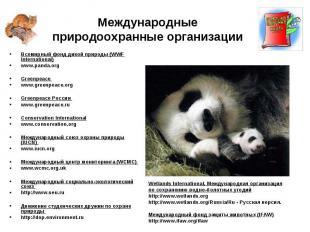 Всемирный фонд дикой природы (WWF International) Всемирный фонд дикой природы (W