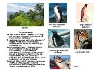 Только факты: Только факты: - 71 вид птиц исчез на Гавайях с тех пор, как челове