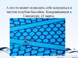 А кто-то может позволить себе искупаться в чистом голубом бассейне. Кондоминимум