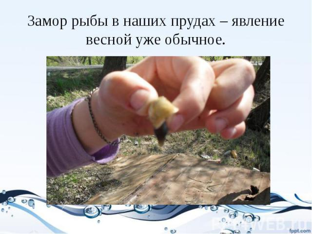 Замор рыбы в наших прудах – явление весной уже обычное.