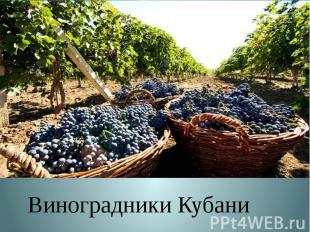 Виноградники Кубани Виноградники Кубани