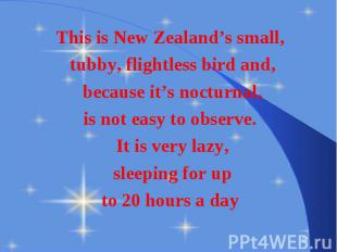 This is New Zealand's small, This is New Zealand's small, tubby, flightless bird