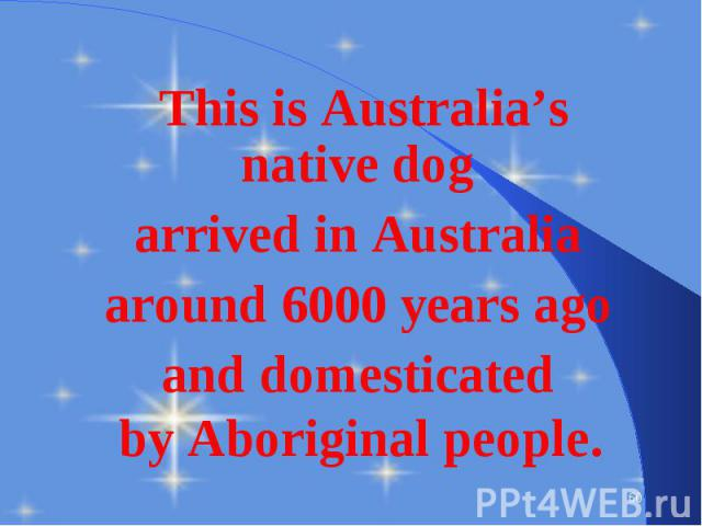 This is Australia's native dog This is Australia's native dog arrived in Australia around 6000 years ago and domesticated by Aboriginal people.
