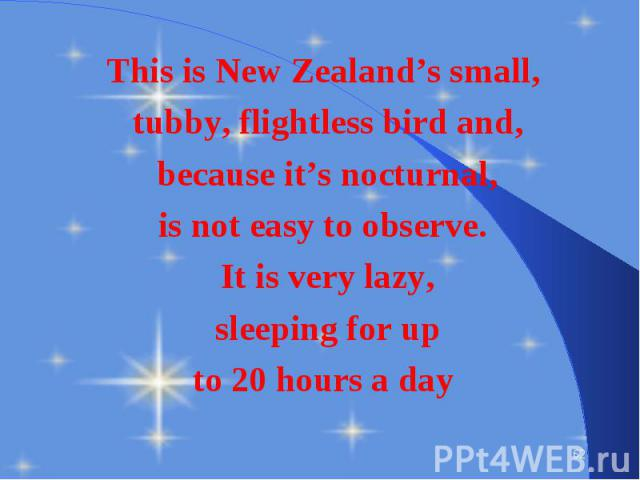 This is New Zealand's small, This is New Zealand's small, tubby, flightless bird and, because it's nocturnal, is not easy to observe. It is very lazy, sleeping for up to 20 hours a day