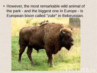 However, the most remarkable wild animal of the park - and the biggest one in Eu
