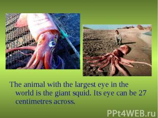 The animal with the largest eye in the world is the giant squid. Its eye can be