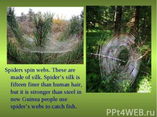 Spiders spin webs. These are made of silk. Spider's silk is fifteen finer than h