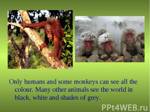 Only humans and some monkeys can see all the colour. Many other animals see the