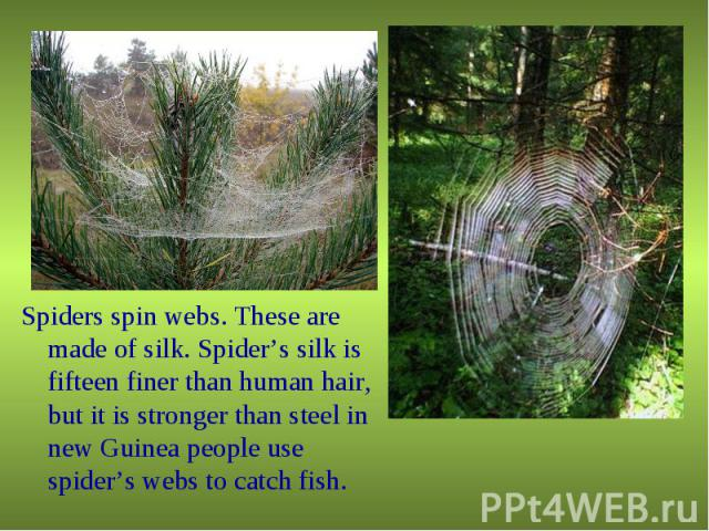 Spiders spin webs. These are made of silk. Spider's silk is fifteen finer than human hair, but it is stronger than steel in new Guinea people use spider's webs to catch fish. Spiders spin webs. These are made of silk. Spider's silk is fifteen finer …