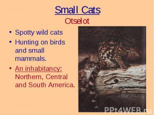 Spotty wild cats Spotty wild cats Hunting on birds and small mammals. An inhabit