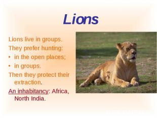 Lions live in groups. Lions live in groups. They prefer hunting: in the open pla