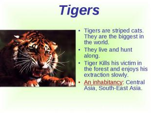 Tigers are striped cats. They are the biggest in the world. Tigers are striped c