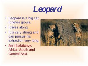 Leopard is a big cat. It never grows. Leopard is a big cat. It never grows. It l