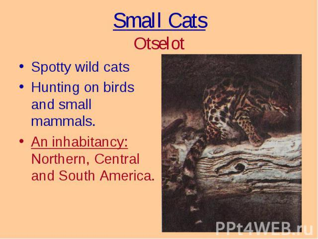 Spotty wild cats Spotty wild cats Hunting on birds and small mammals. An inhabitancy: Northern, Central and South America.