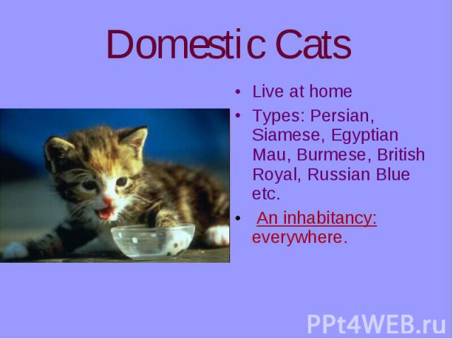 Live at home Live at home Types: Persian, Siamese, Egyptian Mau, Burmese, British Royal, Russian Blue etc. An inhabitancy: everywhere.