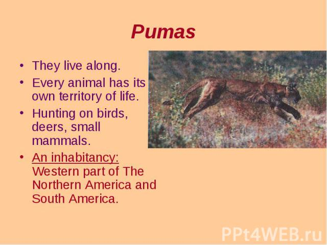 They live along. They live along. Every animal has its own territory of life. Hunting on birds, deers, small mammals. An inhabitancy: Western part of The Northern America and South America.